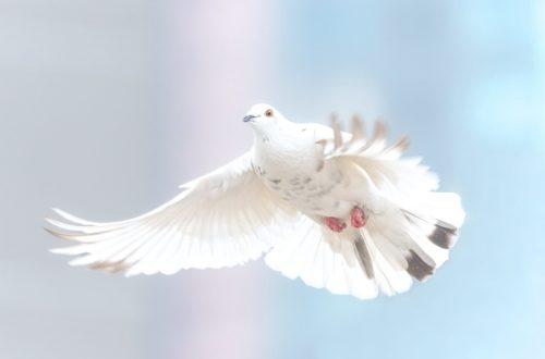 Article : La paix, cet état si fragile #MondoChallenge