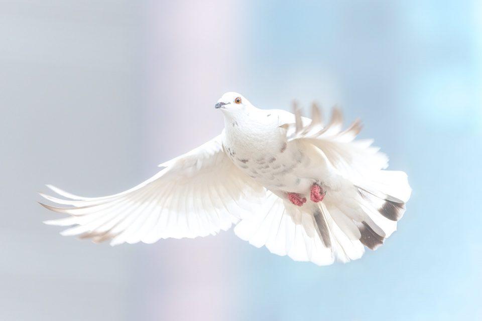 article sur la paix pour le mondoblog challenge par cultik bamba aida marguerite